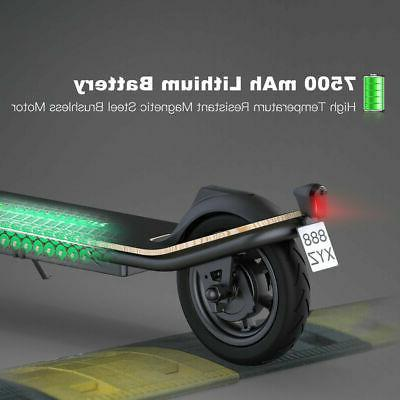 New ! Scooter Adult, New Folding , Black